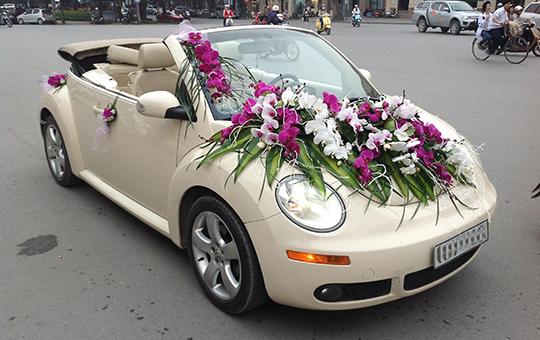 Xe hoa Volkswagen